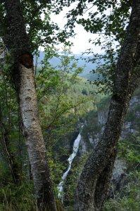 bomen met waterval